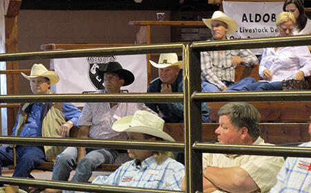 cattle-buyers-at-auction